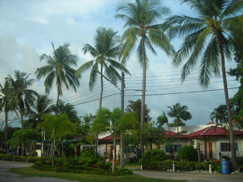 More coconut trees. Oh and the houses you see are where the students stay.
